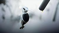 Audi A6 Humming Bird